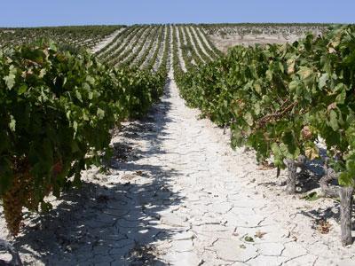 Vini di confine: Jerez