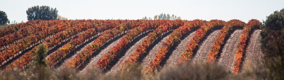 I viaggiatori del cibo e del vino – Ep.2: Pantaleone da Confienza